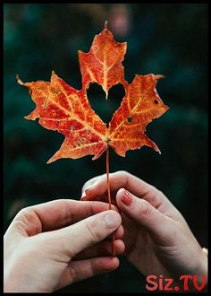 Fall in love. Fall Pictures, Fall Photos, Autumn Photography, Creative Photography, Heart Photography, Autumn Aesthetic, Classy Girl, Autumn Cozy, Fall Wallpaper