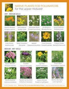 Restoring The Landscape With Native Plants: Plan Now for Spring Pollinators