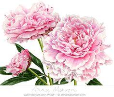 "Peonies © 2014 ~ annamasonart.com ~ 41 x 31 cm (16"" x 12"")"