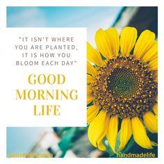 #goodmorning #Friday #sunflower