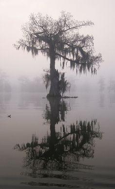 Lake Martin Cypress . Louisiana