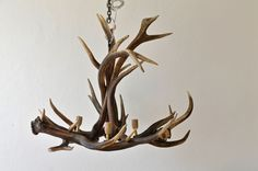exclusive lamp antler