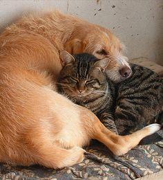 Sitenne snuggling with Berto • photo: Rosita Viola on Flickr