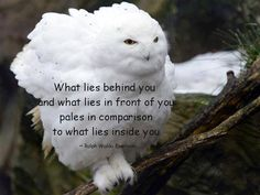 What lies behind you and what lies in front of you pales in comparison to what lies inside you - Ralph Waldo Emerson www.empowerenlightenenvision.com