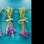 Λεβαντα, τα οφελη και οι χρησεις της! Plant Hanger, Flowers, Plants, Tips, Decor, Decoration, Advice, Florals, Dekoration