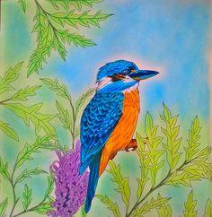 Kingfisher, Where the Wildflowers Grow, Adriana Picker, #kingfisher #coloringforadult #coloringbook #AdrianaPicker #WhereTheWildflowersGrow