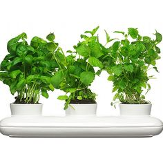 Watering pot for fresh herbs, vegetables and flowers Features a convenient watering hole Keep fresh herbs on the counter Dimensions:15.8 x 5.1 x 3.1 inches