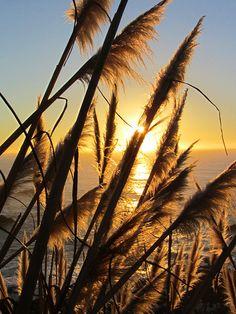Ocean Photography Print, Ocean Sunset, Floral Ocean Sunset Print, Sunset, Ocean, Yellow Sunset on Ocean, California Ocean Sunset