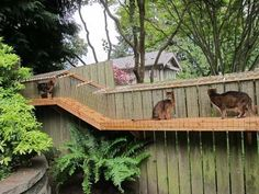 28+ Easy Cat Cages Made Outdoors or Indoor - meowlogy