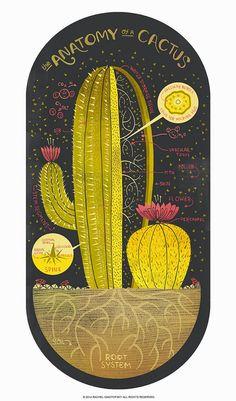 El Blog de La Tabla: Con mucho arte. Anatomía de un cactus y una flor
