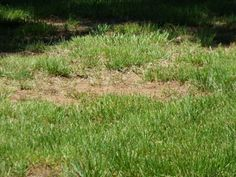 Brown Lawn Care: Reasons For Dying Grass And How To Treat - If you're wondering about reasons for dying grass and how to revive a dead lawn, there are numerous causes and no easy answers. The first step to brown lawn care is figuring out why it's happening. This article will help.