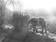 $50. ##Onze Belgische Ardennen , dat is puur genieten!  Like , Repin, Share! Bedankt:]