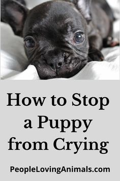 How to Stop a Puppy from Crying in general, how to stop a puppy from crying in the crate, how to stop a puppy from crying at night, and how to stop a puppy from crying when left alone. Best help to stop puppies crying. Puppy Training, Dog Training