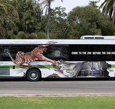 Perth Zoo's Wildlife Conservation - Tiger Rips Bus Open! Save this species....