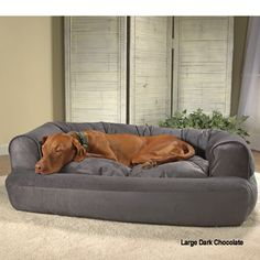 Overstuffed Luxury Sofa Dog Bed. Doctors foster and smith.