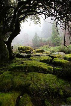 ✿ Il Giardino Segreto ✿ : Photo