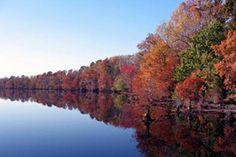 Fall Color in Chesapeake, Virginia.