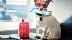 Consejos para preparar el viaje en avión con el perro March 28 2018 at 10:18PM   Consejos para preparar el viaje en avión con el perro  Míralo aquí: http://lealesorg.blogspot.com/2018/03/consejos-para-preparar-el-viaje-en.html #Difunde en #LealesOrg y #adopta para #AdoptaNoCompres O un #SeBusca de #perro o #gatos; #perdido o #encontrado Llega la Semana Santa y muchas personas se desplazan para disfrutar de unos días de descanso. Es una fecha que muchos han bautizado como semana negra porque…