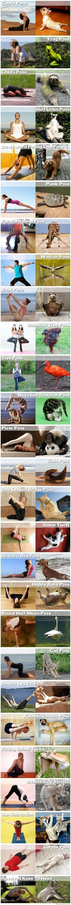 25 animals doing yoga poses. No fair that most of them are better than me!