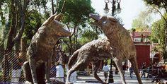 Coyoacán, barrio de mis amores, Distrito Federal   México Desconocido