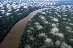 Der Orinoco in der Nähe des Esmeralda (Amazon Regen-Wald), Amazonas-Region, Venezuela