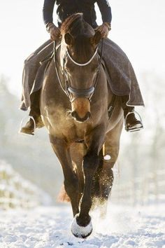 When you are on a great horse, you have the best seat you will ever have. http://www.annabelchaffer.com/categories/Equestrian-Gifts/