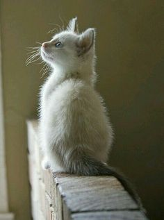 White kitten on a wall...
