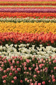 ¿Qué sería una Tulipanera sin tulipanes?, aquí hay donde escoger! / MNAD
