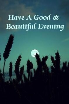 38 Best Good Nightgood Evening Quotes Images Good Night Good