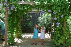 St. Thomas Butterfly Garden Port Adventure #dreamisawishvacations #disneycruiseline #portadventures #butterflygarden