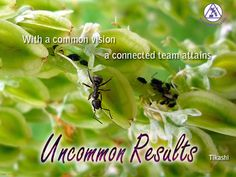 With a common vision a connected team attains uncommon results. ~ Tikashi