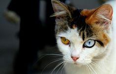 Heterochromia (Iridum) -- I'm kind of obsessed with it.