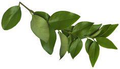 Plant Leaves, Plants, Flora, Plant