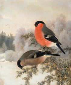 Domherrar, Bullfinches by Ferdinand von Wright, 1893 Scandinavian Paintings, Bullfinch, Pet Birds, Birds 2, Ferdinand, Nature Animals, Winter Scenes, Bird Art, Beautiful Birds