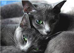 gato enamorado - Buscar con Google