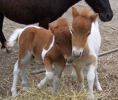 Two Little Foals Brand New!