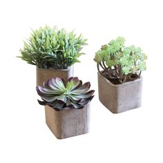 This set of three Desert Flora Potted Plants do a great job of appearing as if they are real succulents. They aren't. But don't they look sweet in their fresh, natural-looking squared pots? If your aes...  Find the Desert Flora Potted Plants - Set of 3, as seen in the Rustic Industrial Living Collection at http://dotandbo.com/collections/rustic-industrial-living?utm_source=pinterest&utm_medium=organic&db_sku=101324