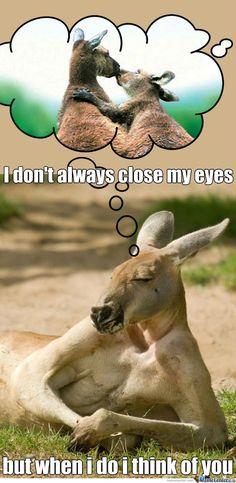 Sarcastic Memes, I Don't Always, I Think Of You, Close My Eyes, Kangaroo, Thinking Of You, Funny, Animals, Baby Bjorn