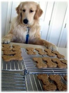 easy doggie bones (only 4 ingredients) 2 cups wholewheat flour 1 Tablespoon baking powder 1 cup natural peanut butter 1 cup lowfat milk Dog Treat Recipes, Dog Food Recipes, Doggy Treats Recipe, Just In Case, Just For You, Zee Dog, Puppy Treats, Natural Peanut Butter, Homemade Dog Treats