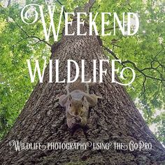 Got a GoPro and want to get some awesome shots of animals? Follow us to get tops and tricks about capturing nature on the GoPro Little Camera, Wide Angle Lens, Squirrels, Wildlife Photography, Gopro, Shots, Awesome, Nature, Animals