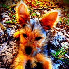 """Puppy power. """"oh...... hello. peek a boo!"""" pupppy says."""