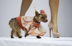 Dog Fashion Show   DESKTOP WALLS CELEBRITIES WALLS TECHNO WORLD