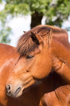 Horse Pretty Horses, Horse Love, Beautiful Horses, Animals Beautiful, Funny Horse Pictures, Horse Photos, Horse Stables, Horse Farms, Animals And Pets