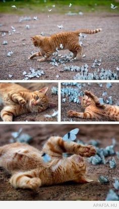 cat and a lot of butterfly