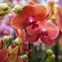 Levirágzott az orchideád? Mutatjuk, mitől lesz újra szép