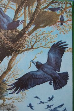 Crows Ravens:  #Ravens, C.F. Tunnicliffe.