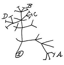 Image result for charles darwin evolution