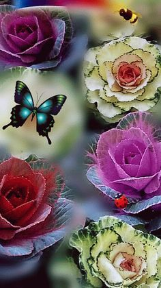 Ultramegon Whistle fairly brown wish Beautiful Flowers Wallpapers, Beautiful Rose Flowers, Beautiful Gif, Beautiful Butterflies, Flowers Gif, Butterfly Flowers, Flower Art, Pink Flowers, Butterfly Pictures