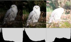 Understanding histograms in photography