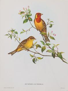 Colorful angel Vintage Print Repro Bird Postcard Angel of the Birds
